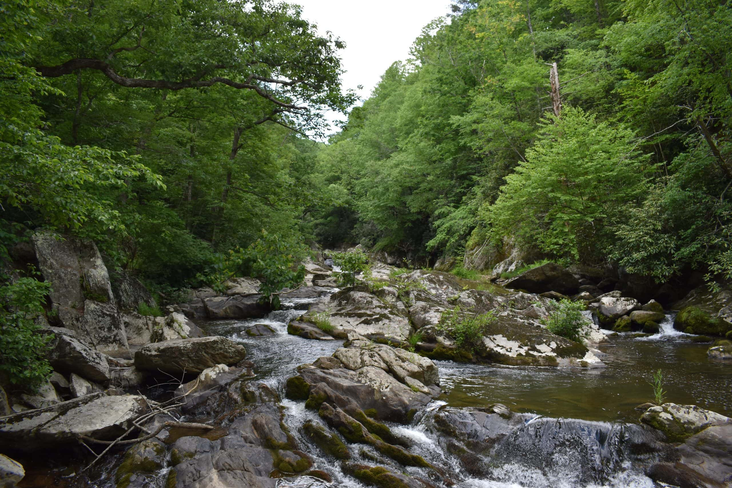 Hikes Around Roanoke  - Bottom Creek Gorge