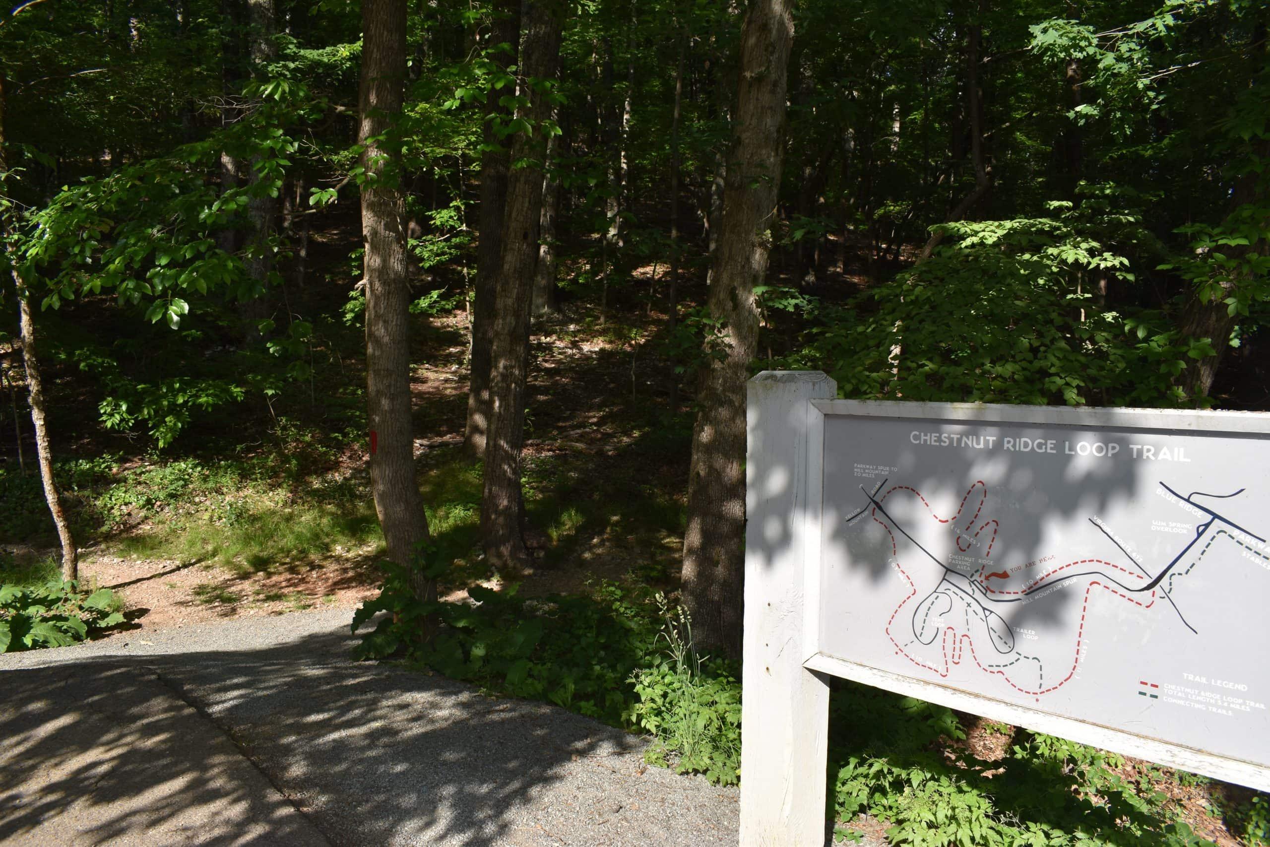 Chestnut Sign scaled