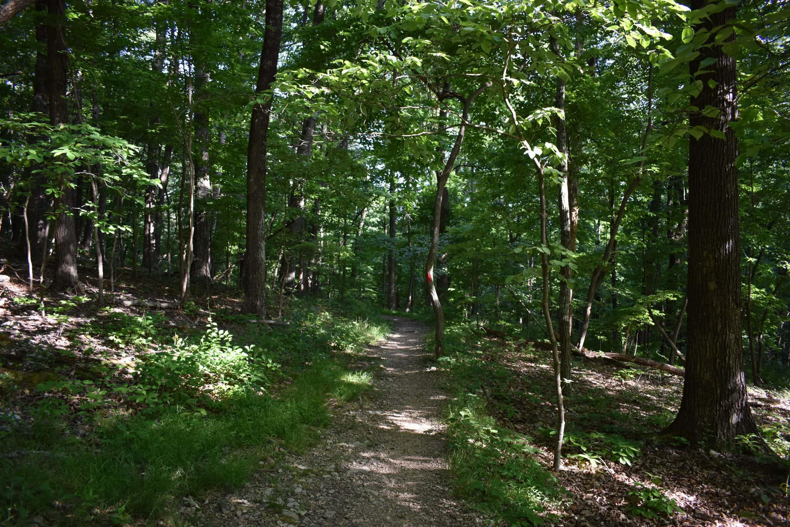 Nature Walks Near Roanoke Va - Chestnut Ridge Trail - Yoanoke